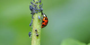 Pest Control ?>